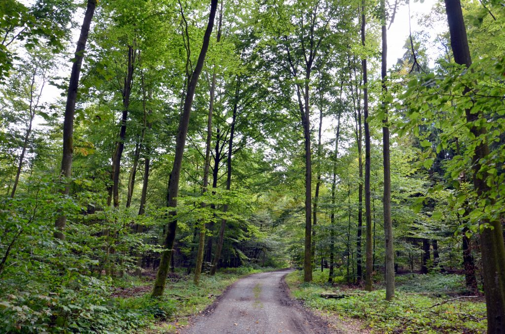 chemin forestier FTLB-P.Willems